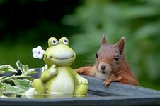 Free Squirrel, Mammal, Fauna, Rodent Stock Photos - 100244333