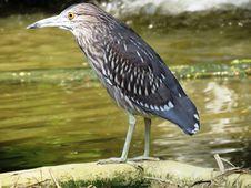 Free Bird, Beak, Fauna, Pelecaniformes Stock Image - 100244501