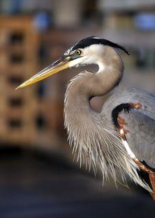 Free Bird, Beak, Fauna, Wildlife Royalty Free Stock Photos - 100244778