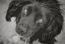 Free Dog, Dog Like Mammal, Black, Black And White Stock Photos - 100244863