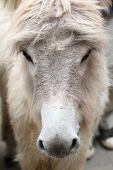 Free Donkey, Fauna, Horse Like Mammal, Mane Stock Image - 100244921