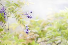 Free Flower, Lilac, Purple, Plant Stock Images - 100245164