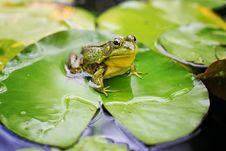 Free Frog, Ranidae, Amphibian, Fauna Royalty Free Stock Photos - 100245958