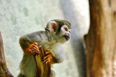 Free Fauna, Mammal, Macaque, Primate Stock Photo - 100249980