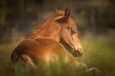 Free Horse, Fauna, Mane, Horse Like Mammal Royalty Free Stock Photography - 100250407