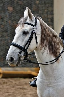 Free Horse, Bridle, Rein, Horse Tack Stock Images - 100252774