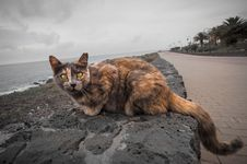 Free Cat, Small To Medium Sized Cats, Whiskers, Cat Like Mammal Royalty Free Stock Photo - 100254195