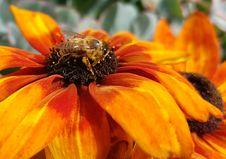 Free Flower, Yellow, Honey Bee, Bee Stock Images - 100254504