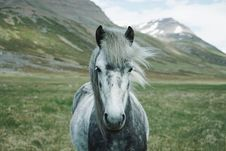 Free Horse, Ecosystem, Horse Like Mammal, Mane Stock Photos - 100255623