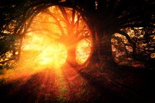 Free Nature, Forest, Light, Fire Stock Image - 100256511