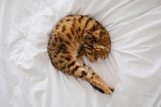 Free Cat, Mammal, Small To Medium Sized Cats, Cat Like Mammal Stock Image - 100256561