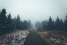 Free Fog, Forest, Wilderness, Tree Royalty Free Stock Image - 100256606