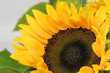 Free Flower, Sunflower, Yellow, Sunflower Seed Stock Photos - 100256633