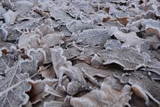 Free Frost, Freezing, Geology, Winter Stock Photos - 100259043