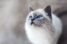 Free Cat, Whiskers, Small To Medium Sized Cats, Mammal Royalty Free Stock Photos - 100260198