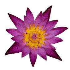 Free Flower, Purple, Violet, Flora Stock Photos - 100260773