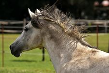 Free Horse, Fauna, Mane, Horse Like Mammal Stock Photos - 100261813