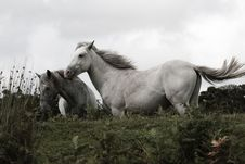 Free Horse, Mane, Horse Like Mammal, Fauna Royalty Free Stock Image - 100262116