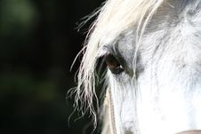 Free Horse, Mane, Horse Like Mammal, Nose Stock Photos - 100265773