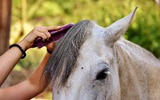 Free Horse, Mane, Horse Like Mammal, Horse Supplies Stock Photography - 100265912