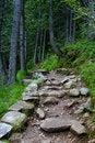 Free Path Stock Photo - 10036600