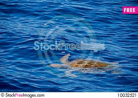 Free Sea Turtle Stock Image - 10032521