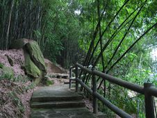 Free Bamboo Grove Stock Images - 10031694