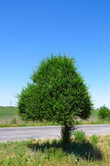 Free Tree Stock Photos - 10031833