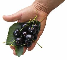 Free Cherries In Hand Royalty Free Stock Photography - 10032757