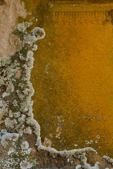 Free Lichen On Stone Royalty Free Stock Image - 10032846