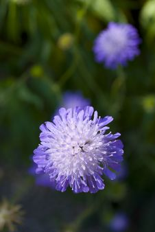 Free A Purple Flower Royalty Free Stock Photography - 10033017
