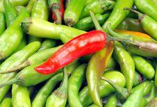 Free Chillies Stock Image - 10035401