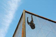 Free Gibbon Stock Photos - 10035493