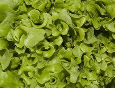 Free Lettuce Stock Photos - 10035983