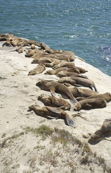 Seals Resting Royalty Free Stock Photography