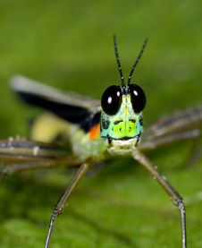 Free Grasshopper Smile Stock Image - 10037041