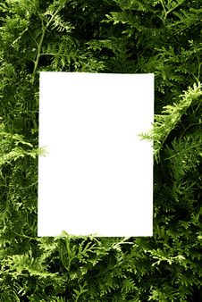 Free Sheet And Bush Royalty Free Stock Photo - 10037905