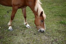Free Horse Grazing Stock Photo - 10039270