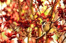 Free Red, Branch, Autumn, Leaf Royalty Free Stock Image - 100320496