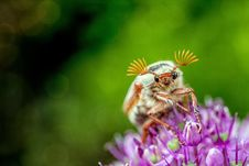 Free Insect, Honey Bee, Macro Photography, Close Up Stock Image - 100320691