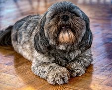 Free Dog Like Mammal, Dog Breed, Dog, Snout Royalty Free Stock Image - 100322126