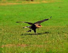 Free Bird, Ecosystem, Fauna, Wildlife Royalty Free Stock Images - 100323449