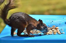 Free Mammal, Fauna, Squirrel, Rodent Royalty Free Stock Images - 100326319