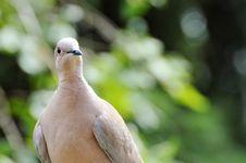 Free Bird, Beak, Fauna, Close Up Royalty Free Stock Photography - 100327167