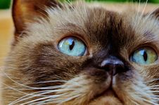Free Cat, Whiskers, Eye, Small To Medium Sized Cats Royalty Free Stock Photography - 100327197