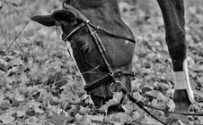 Free Horse, Black And White, Bridle, Horse Like Mammal Stock Images - 100327444