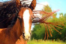 Free Horse, Mane, Horse Like Mammal, Fauna Royalty Free Stock Image - 100328506