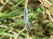 Free Dragonfly, Insect, Dragonflies And Damseflies, Damselfly Stock Images - 100328604