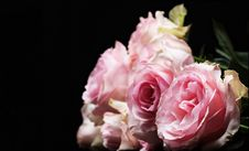 Free Flower, Rose, Pink, Rose Family Stock Photography - 100328712