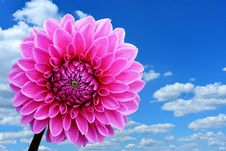 Free Flower, Pink, Sky, Flowering Plant Royalty Free Stock Images - 100331609